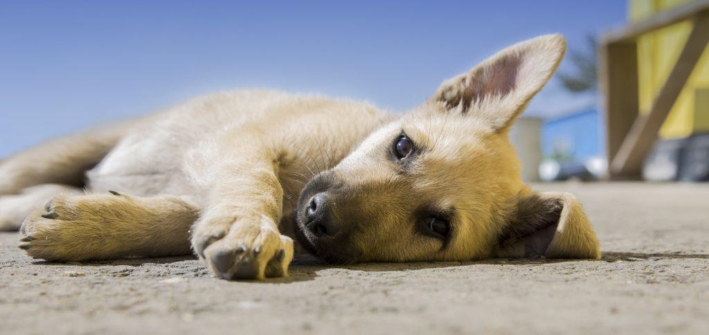 Animais em condomínio: o que é permitido?