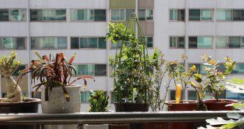 Como ter plantas em apartamento apartamento