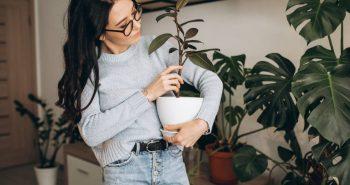 Jardim em casa: aprenda como fazer